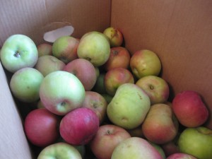 bushel of macintosh apples