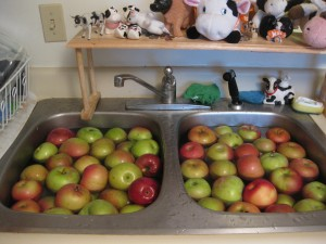apples in sink being washed
